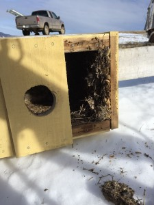 Kestrel Box Cleaning
